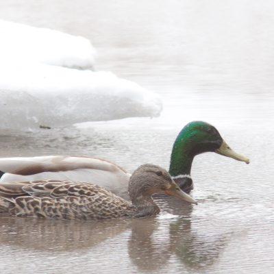 duck servoces image