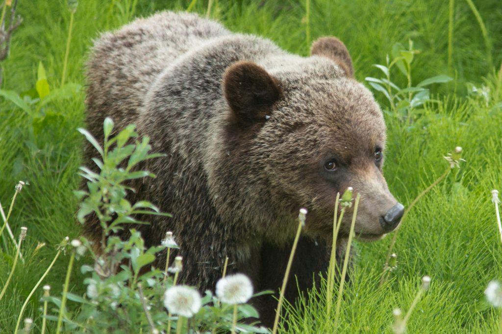 individual counselling bear image
