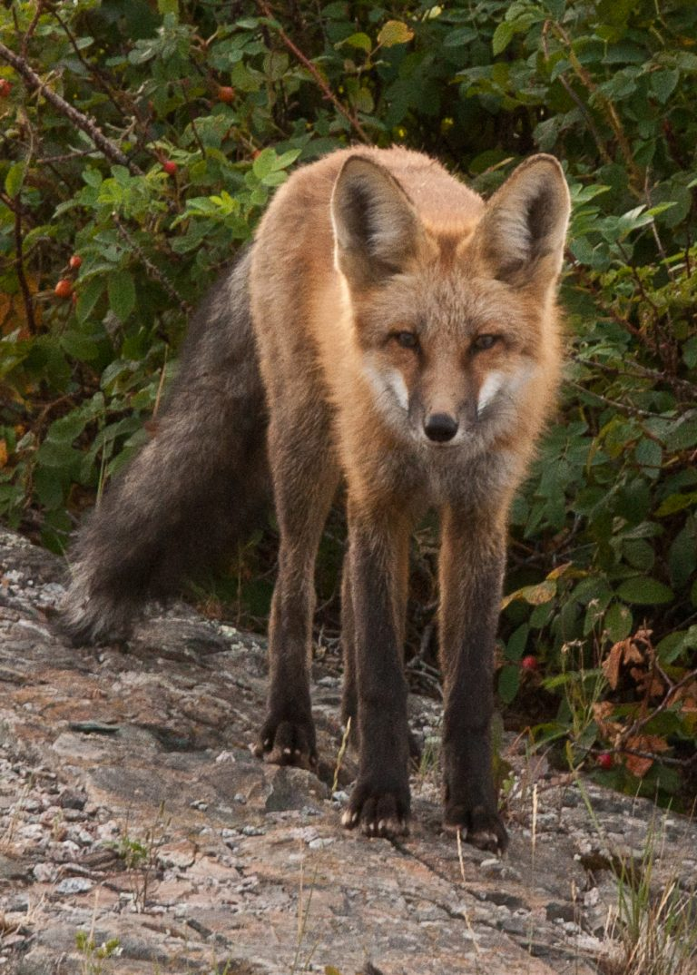 individual counselling fox image